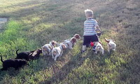 Nicholas and the puppies mow the lawn